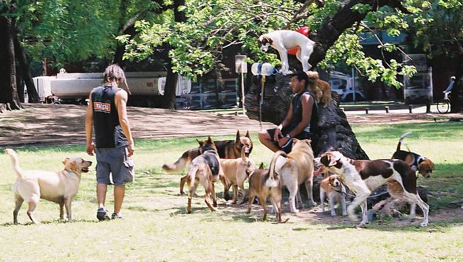 village dog walker
